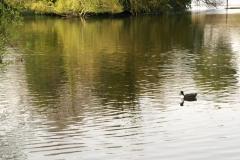 Highams Park Lake 1