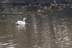 Highams Park Lake 2